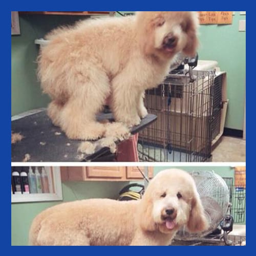 Stylish Dog Grooming in Allentown, PA